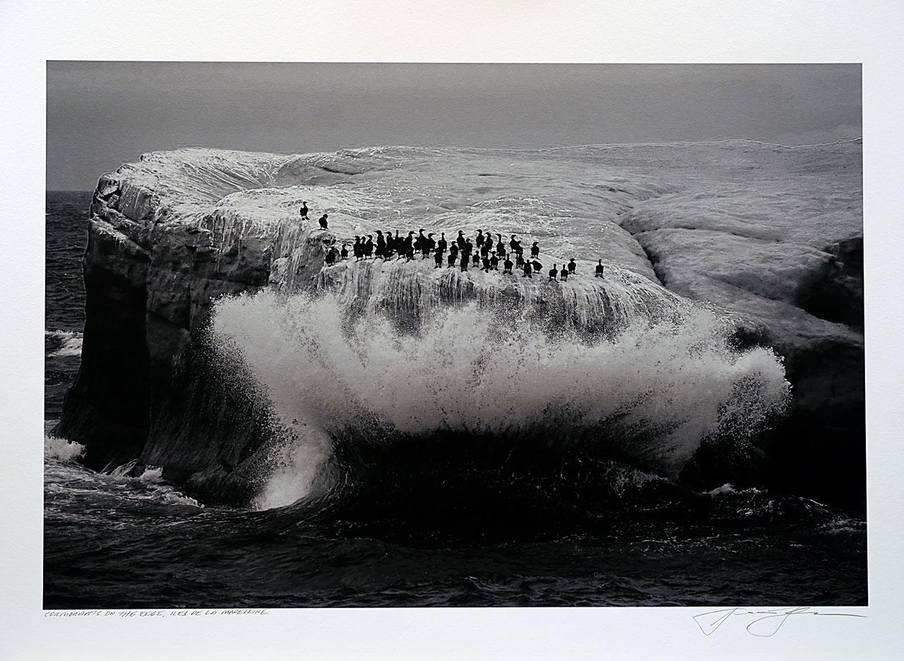 print-Canada-Quebec-cormorants-iles-de-la-madeleine