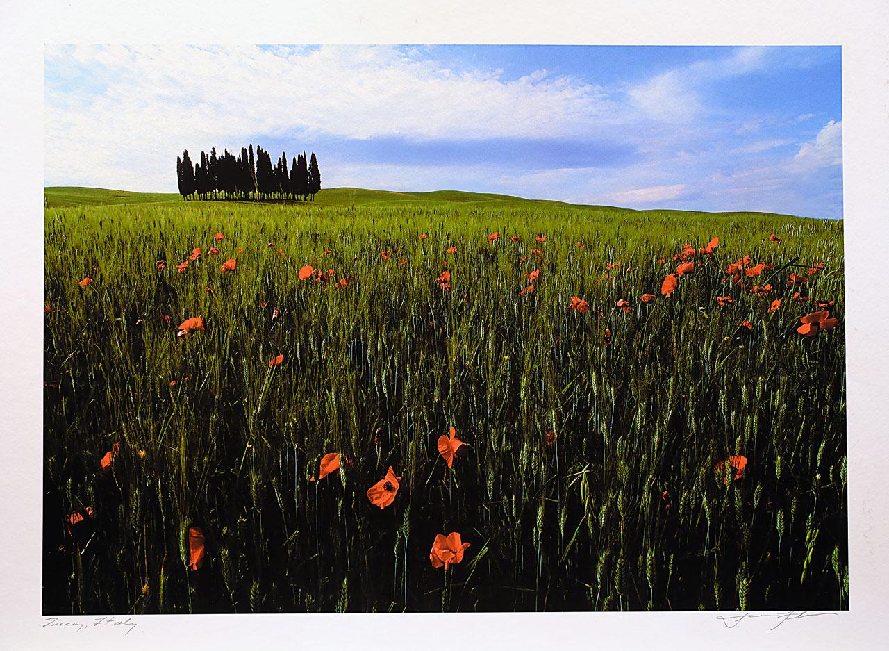 print-Italy-trees-tuscany